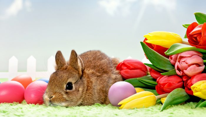 easter in Anna Grand Hotel